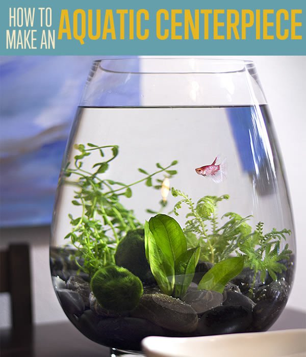 DIY Small Fish Tank Aquarium Centerpiece