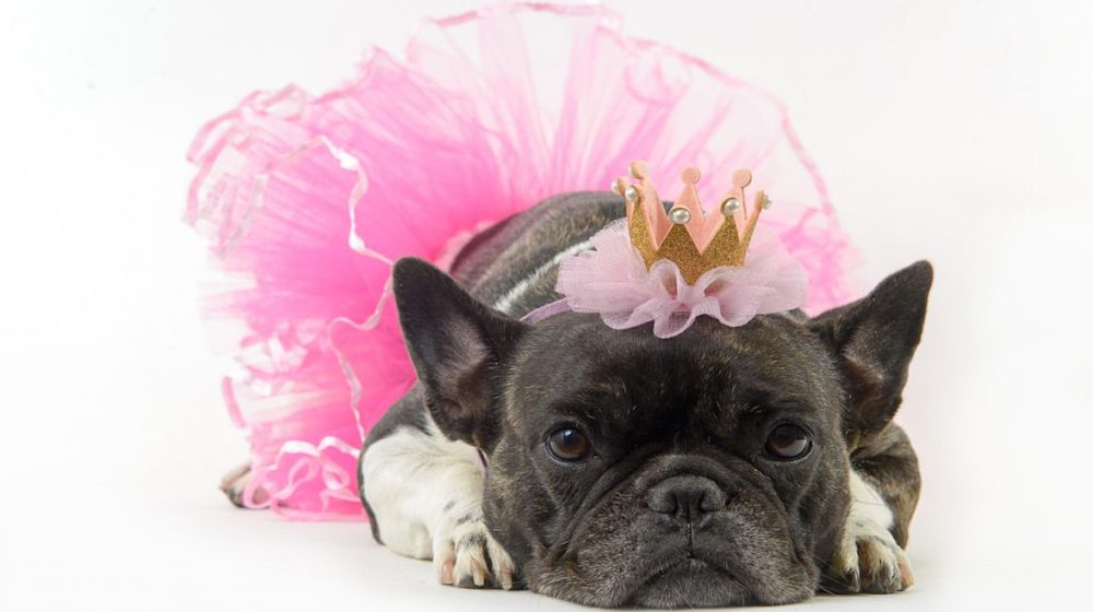 Best Sewing Projects for Pets: Tutu