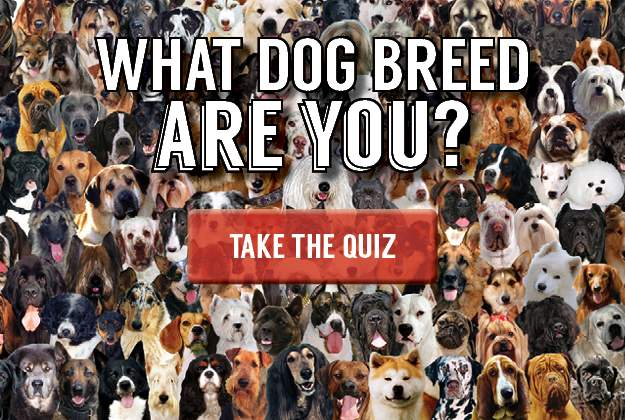 What dog breed are you? Take our quiz to find out!