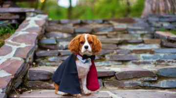Cute puppy dracula | DIY Dog Costume Ideas + QUIZ: What's Your Dog's Costume Personality | Featured