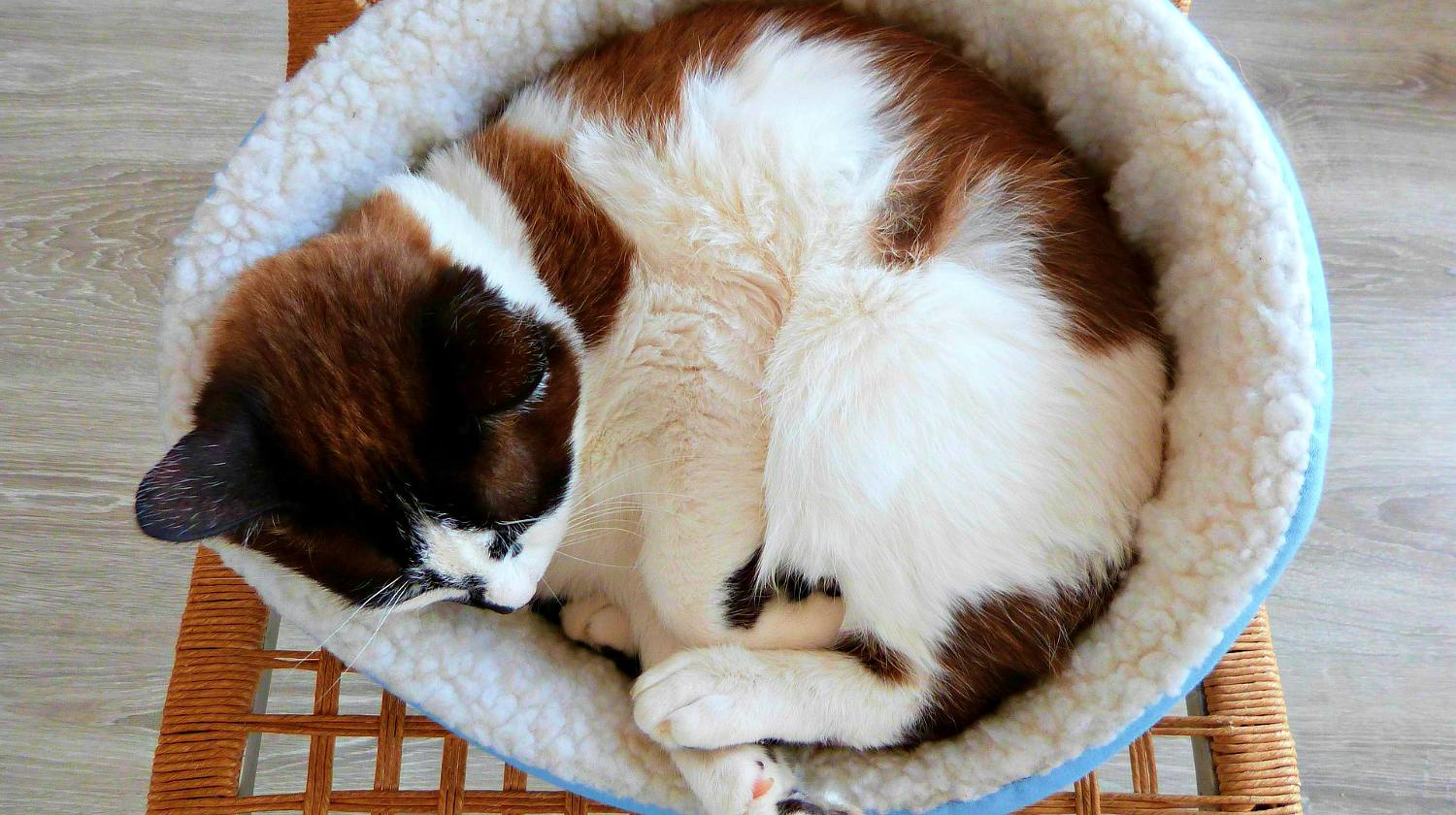 Feature | Cat bed | Creative Cat DIY Home Projects for Cat Lovers