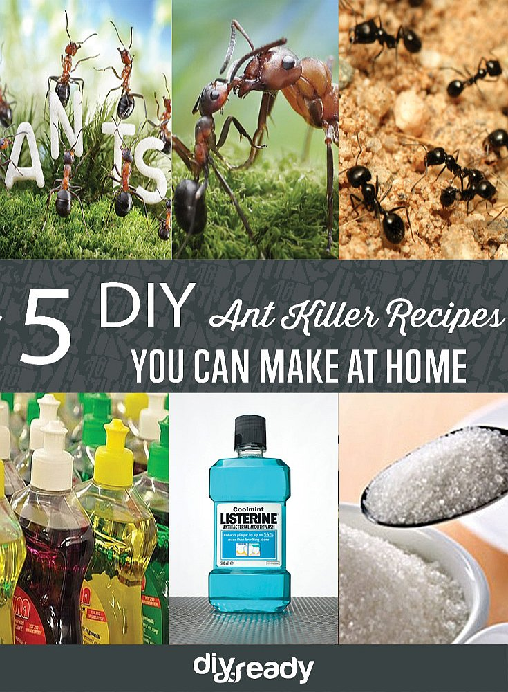 Get rid of Ants with these DIY Ant Killer Recipes by DIY Projects at https://diyprojects.com/diy-ant-killer-5-ant-killer-recipes-you-can-make-at-home