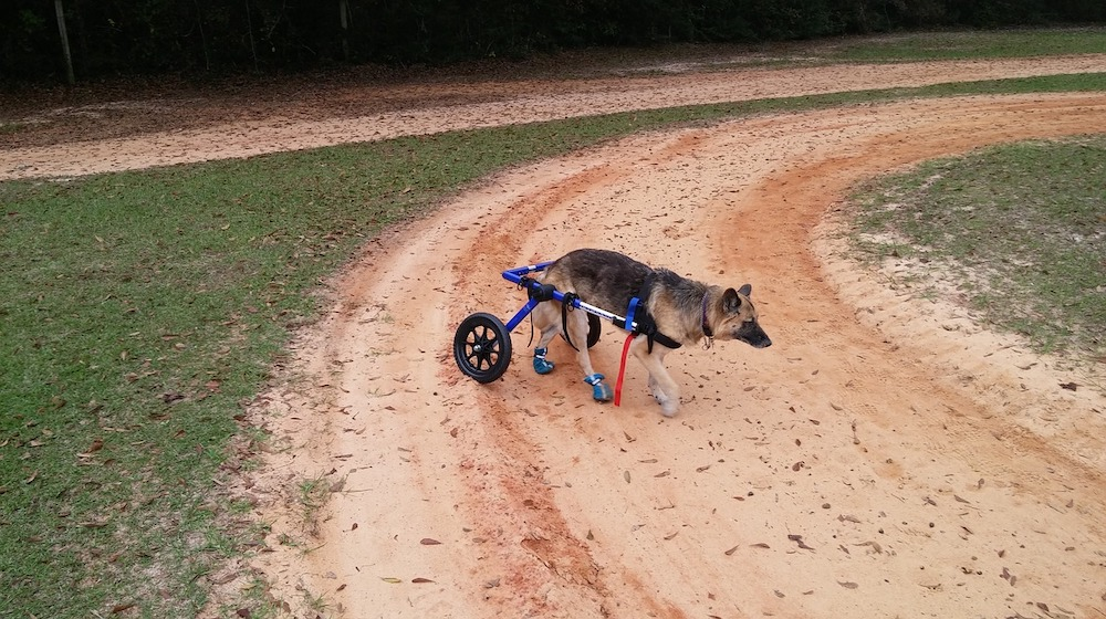 Build a Wheelchair for Dogs DIY Projects Craft Ideas & How