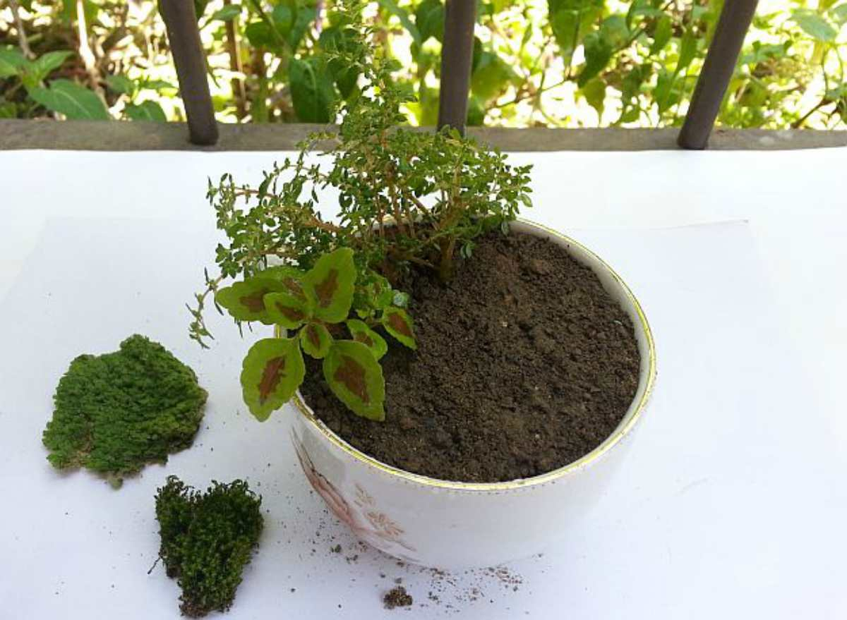 Place the plants   DIY Fairy Garden To Create A Little Zen In Your Busy Life