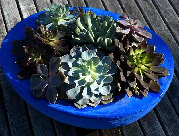 Go Bold and Bright Succulent   Amazingly Beautiful Succulent Plants: The Hip DIY Trend To Bring Color To Your Home Living
