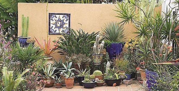Outdoor Succulent Patio | Amazingly Beautiful Succulent Plants: The Hip DIY Trend To Bring Color To Your
