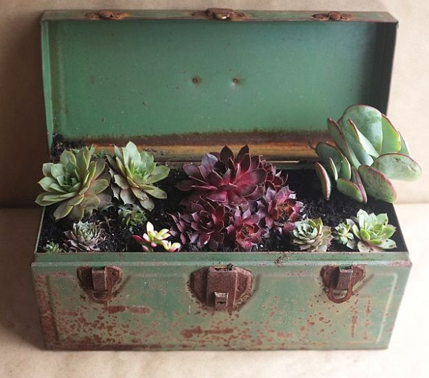 Vintage Succulent Toolbox   Amazingly Beautiful Succulent Plants: The Hip DIY Trend To Bring Color To Your Home Living