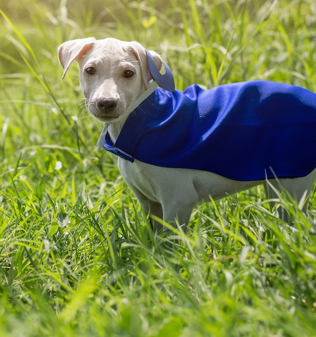 Check out Easy DIY No Sew Dog Jacket at https://diyprojects.com/no-sew-dog-jacket/