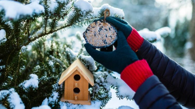 feeding-birds-winter-woman-bird-food | 7 Ways to Turn Your Garden into a Winter Wonderland | Featured