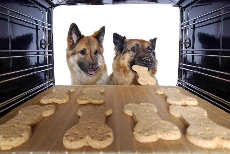 two-dogs-stealing-dog-biscuits-out   homemade dog cookies