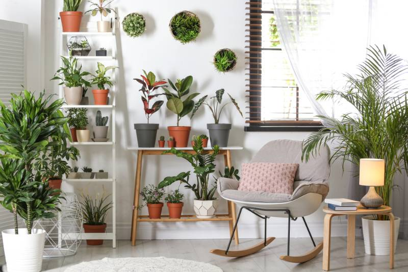 stylish room interior different home plants   decorating hacks for renters