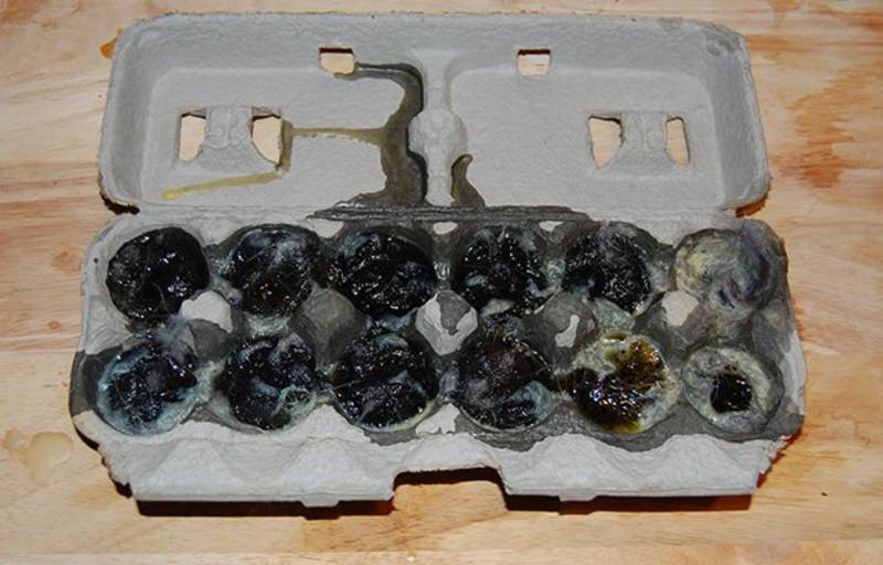 let-your-dryer-lint-and-wax-dry-on-the-egg-carton | is dryer lint a good fire starter