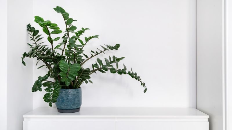 home-decor-concept-green-houseplant-standing | plant stand diy